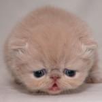 furball cat